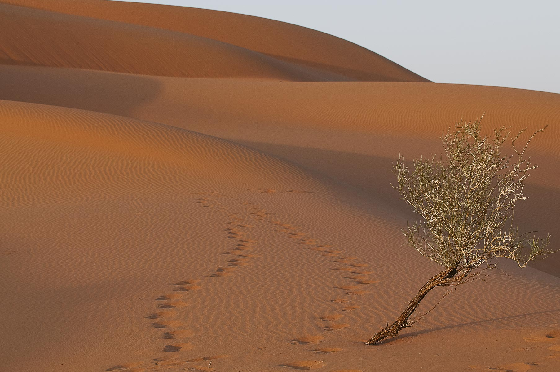 4-Saudi-Arabia-Empty-Quarter-Dunes-0771new